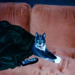 /photos/smokie-couch.jpg