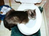 /photos/smokie-toilet.jpg